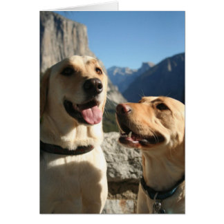 Dogs_TunnelView copy Card