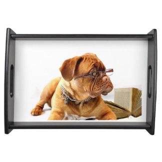 dogue de bordeaux dog wearing glasses serving tray