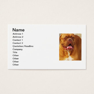 Dogue de Bordeaux French mastiff Business Card