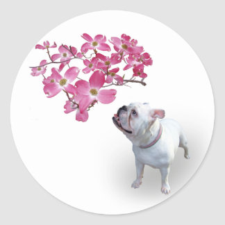 Dogwood and bulldog classic round sticker