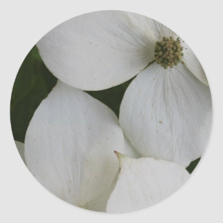 Dogwood Dream Classic Round Sticker