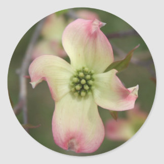 Dogwood Flower Classic Round Sticker