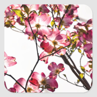 Dogwood in Bloom Square Sticker