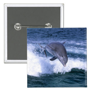 Dolphin jumping, Grand Bahama, Bahamas 15 Cm Square Badge