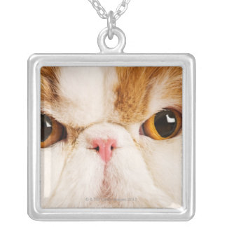 Domestic cat. Calico Harlequin Persian. Close up Silver Plated Necklace