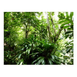 Dominican Rain Forest I Tropical Green Nature Postcard