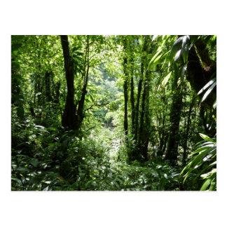 Dominican Rain Forest II Tropical Green Postcard