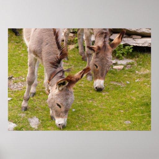 Donkey Cute Mule Farm Animal Country Destiny Print