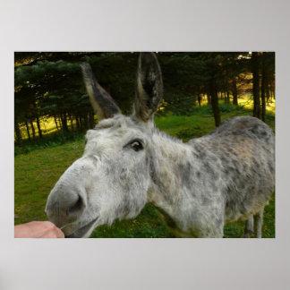 Donkey Cute Mule Farm Animal Country Destiny Poster