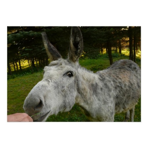 Donkey Cute Mule Farm Animal Country Destiny Posters