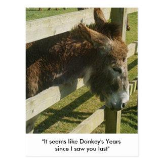 Donkey Greetings Postcards