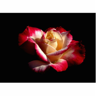 Double Delight Rose Photo Sculpture  #2  2222