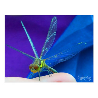 Dragonfly Days Post Cards