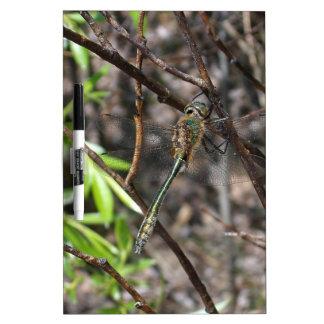 Dragonfly Dry Erase Board