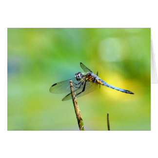 Dragonfly Hang On! Card