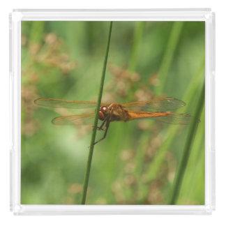 Dragonfly, Perfume Tray.