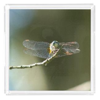 Dragonfly, Perfume Tray. Acrylic Tray