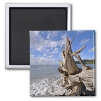 Driftwood On The Shoreline Of French Beach Magnet