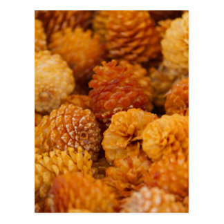 dry pine cones postcard