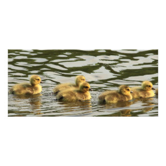 duckling line full color rack card