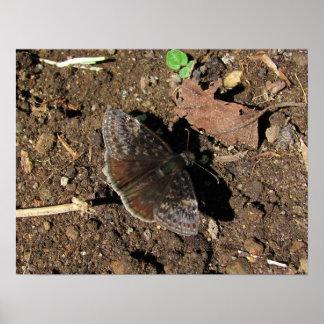 Duskywing Butterfly print