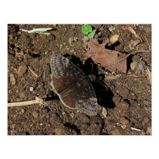 Duskywing Butterfly print