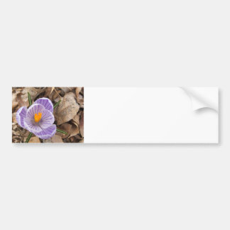 Dutch Crocus Flower first sign spring Bumper Sticker