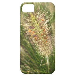 DWARF FOUNTAIN GRASS iPhone 5 CASE