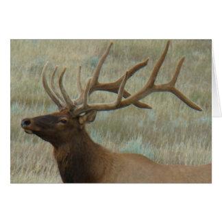 E0009 Bull Elk in Velvet Card
