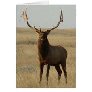 E0013 Bull Elk Card