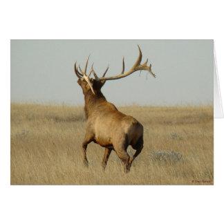 E0023 Bull Elk Card