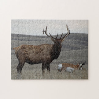 E0063 Bull Elk and Pronghorn Antelope Jigsaw Puzzle