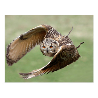 Eagle Owl In Flight Postcard