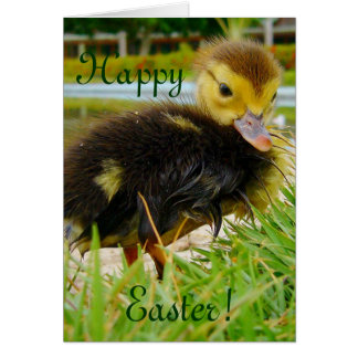 Easter Chick I Greeting Card