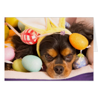 Easter Eggs Cavalier King Charles Spaniel Card
