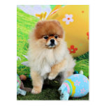 Easter - Pomeranian - Dexter