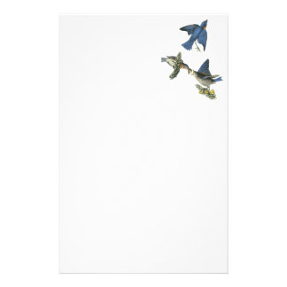 Eastern Bluebird, John Audubon Stationery