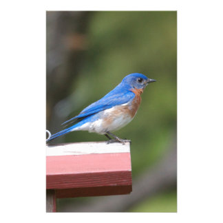 Eastern Bluebird Stationery