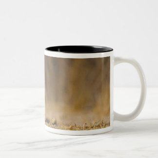 Eastern cottontail rabbit hopping Two-Tone coffee mug