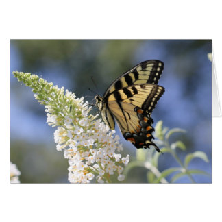 Eastern Tiger Swallowtail Butterfly Notecard Note Card