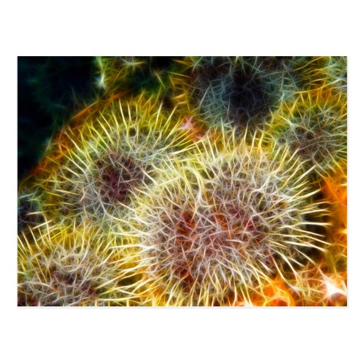 Edible Sea Urchin Post Cards