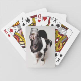 Edison Boston Terrier puppy. Playing Cards