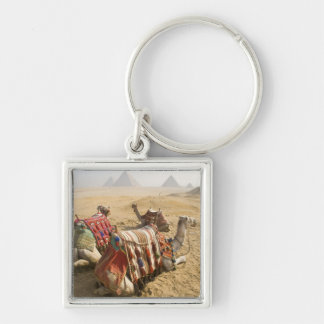 Egypt, Cairo. Resting camels gaze across the Silver-Colored Square Key Ring