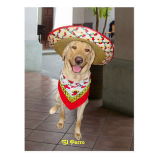 El Perro Postcard