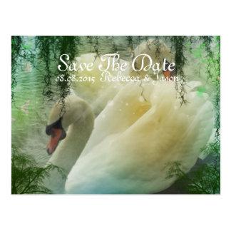 Elegant pair of white swans postcard