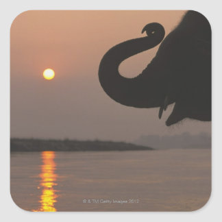 Elephant, Chitwan National Park, Nepal Square Sticker