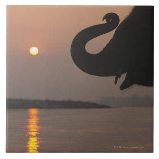 Elephant, Chitwan National Park, Nepal Large Square Tile