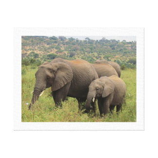 Elephant with Baby Gallery Wrapped Canvas