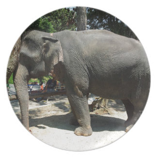 Elephants in Thailand Plate