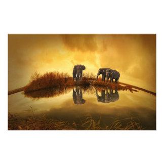 Elephants Scrapbook Paper